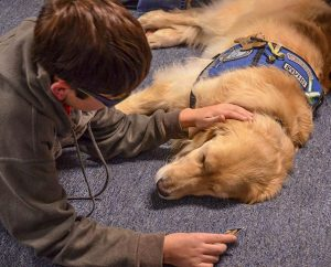 "Lutheran Church Charities ""comfort dog"" Shami and a new friend relax in the fellowship hall of Messiah Lutheran Church, Marysville, Wash., after the Oct. 27 worship service. (Ron Norris)"